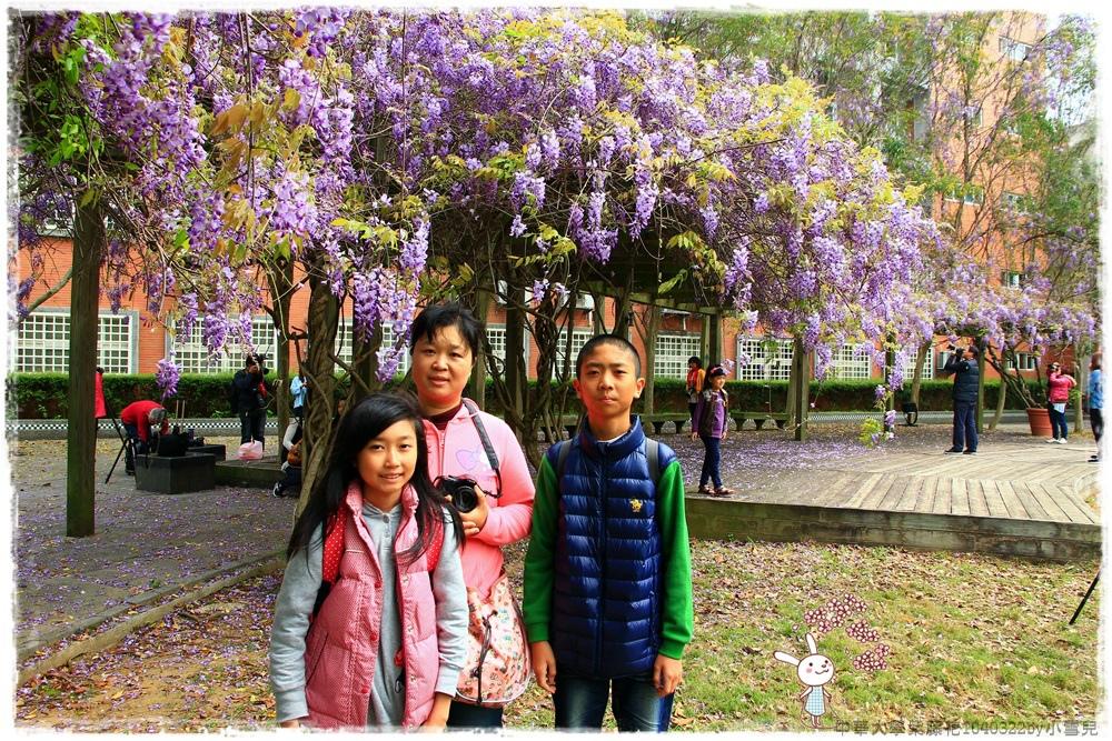 中華大學紫藤花1040322by小雪兒IMG_8254.JPG