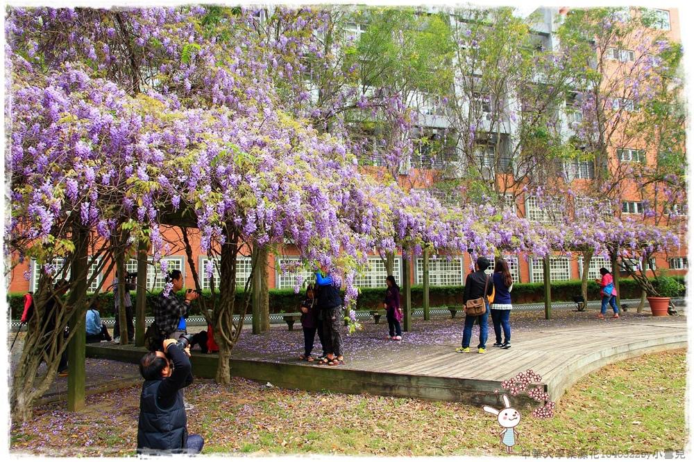中華大學紫藤花1040322by小雪兒IMG_8266.JPG
