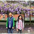 中華大學紫藤花1040322by小雪兒IMG_8270.JPG
