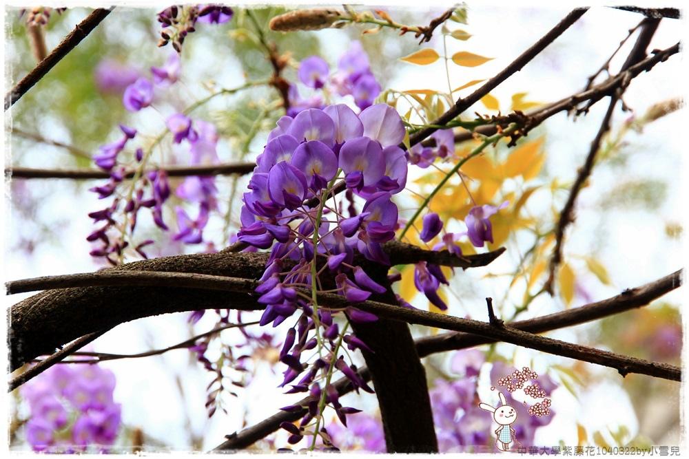 中華大學紫藤花1040322by小雪兒IMG_8287.JPG