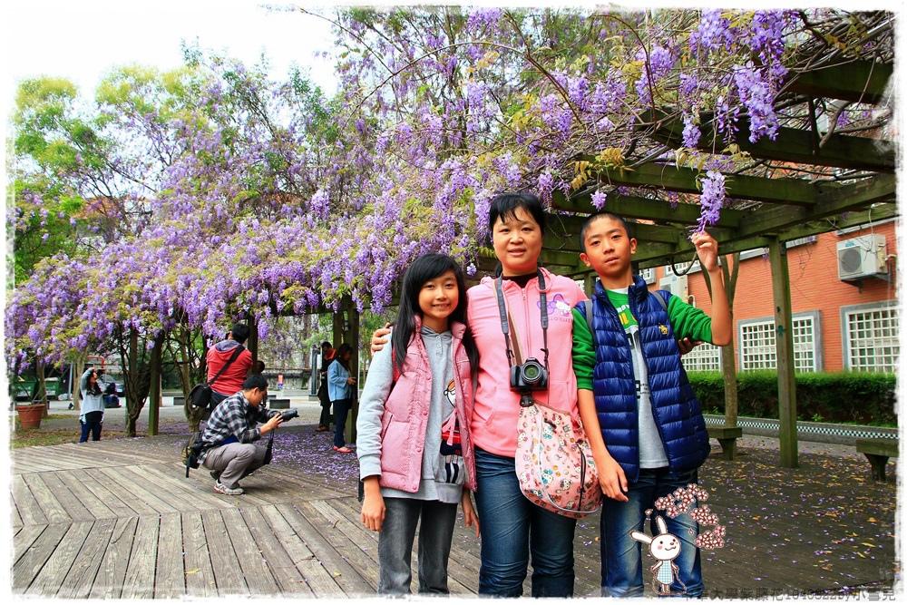 中華大學紫藤花1040322by小雪兒IMG_8301.JPG