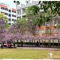 中華大學紫藤花1040322by小雪兒IMG_8359.JPG
