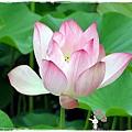 三芝遊客中心名人文物館1040607by小雪兒IMG_7893.JPG