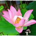 三芝遊客中心名人文物館1040607by小雪兒IMG_9035.JPG