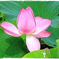 三芝遊客中心名人文物館1040607by小雪兒IMG_9037.JPG