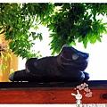 屋頂上的貓by小雪兒的窩1040803IMG_0310 017.JPG
