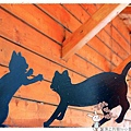屋頂上的貓by小雪兒的窩1040803IMG_0322 027.JPG