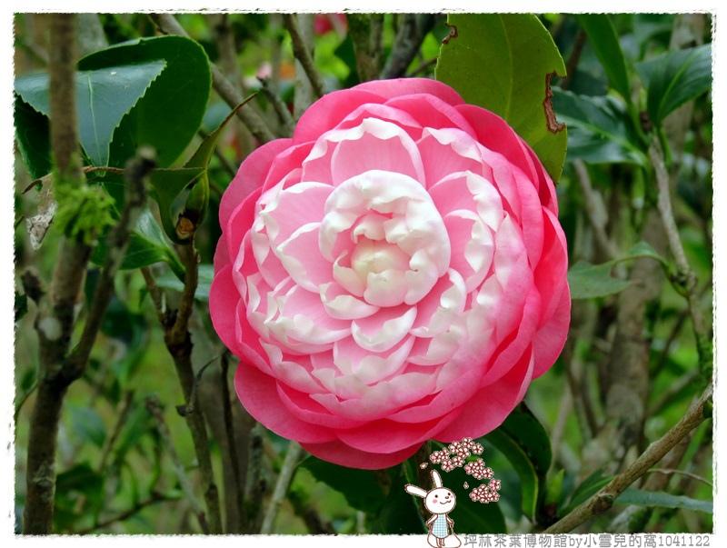 坪林茶葉博物館by小雪兒的窩1041122IMG_2083 011.JPG