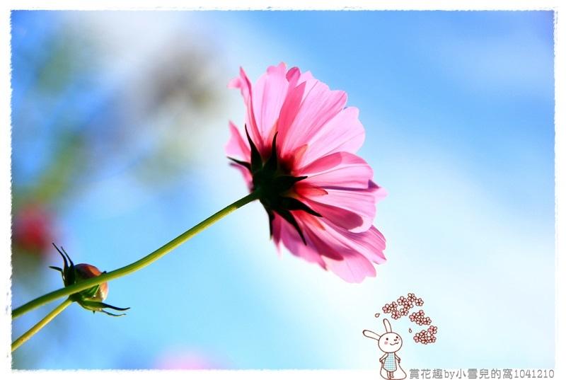 賞花趣by小雪兒的窩1041210IMG_5629 021.JPG