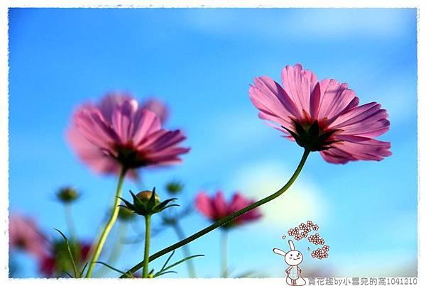 賞花趣by小雪兒的窩1041210IMG_5631 023.JPG