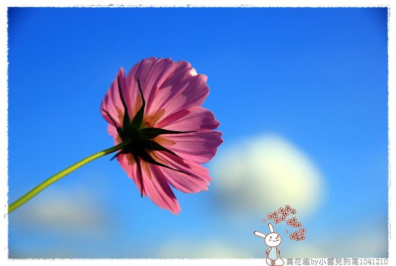 賞花趣by小雪兒的窩1041210IMG_5646 030.JPG