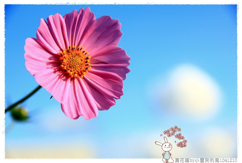 賞花趣by小雪兒的窩1041210IMG_5648 031.JPG