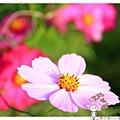 賞花趣by小雪兒的窩1041210IMG_5649 032.JPG