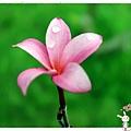 遇見幸福1050814IMG_0457.JPG
