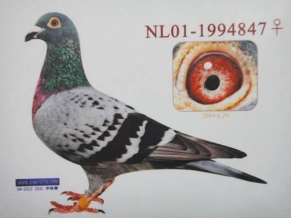 1994847-01