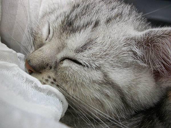 很安穩的睡