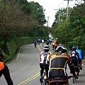 2011陽金P字山道021.JPG
