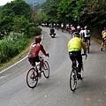 2011陽金P字山道026.JPG