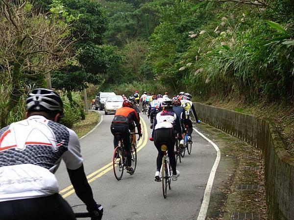 2011陽金P字山道030.JPG