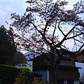 白川042.JPG
