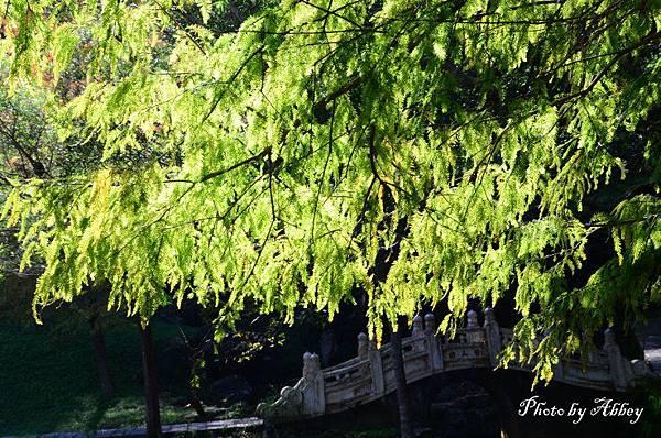 溪州公園 (9).JPG