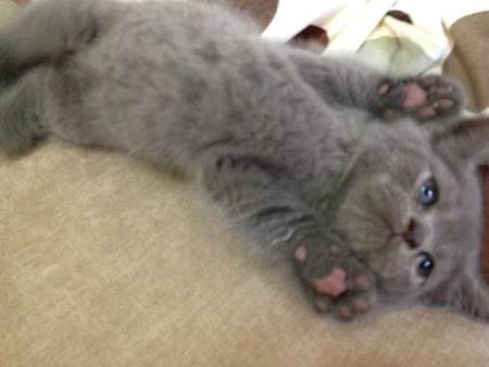 哈囉小貓咪