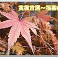 newDSC04115_副本