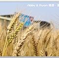 newIMG_2290.jpg
