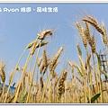 newIMG_2294.jpg