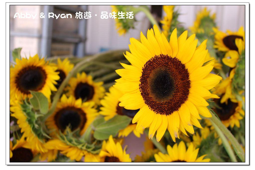 newIMG_6583.jpg