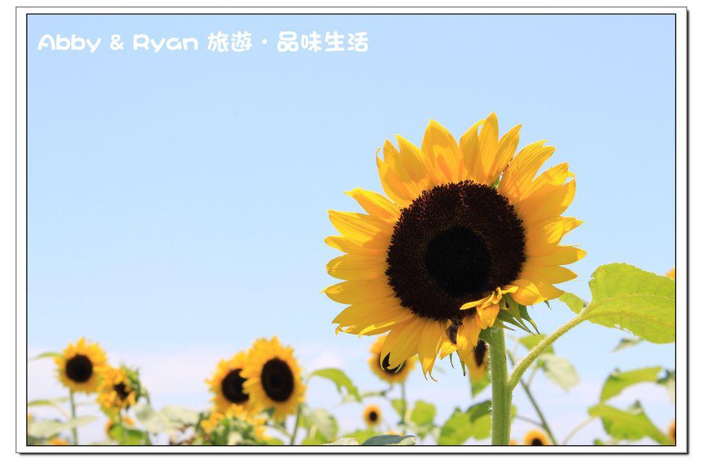 newIMG_6658.jpg