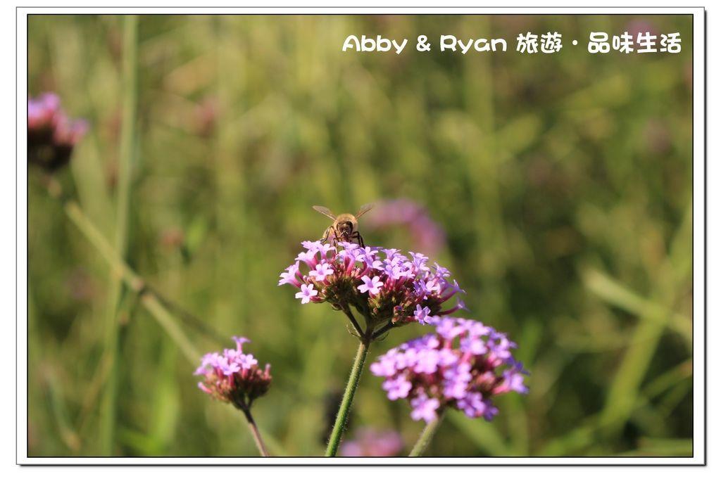 newIMG_6811.jpg