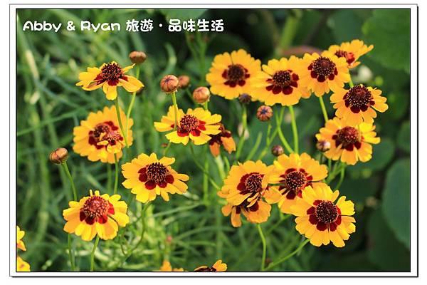 newIMG_6814.jpg