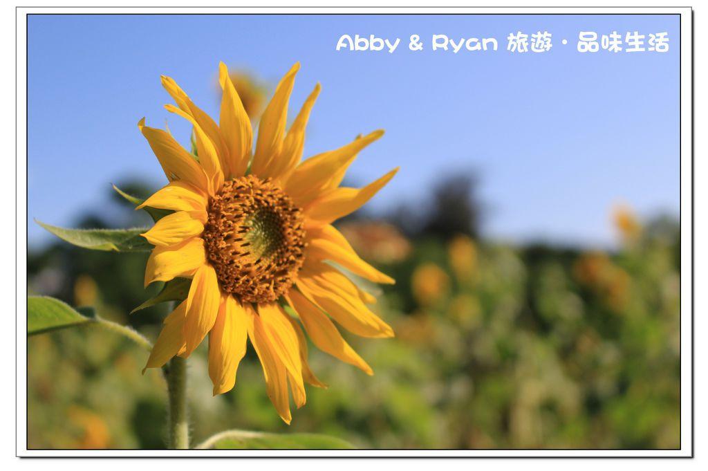 newIMG_6869.jpg