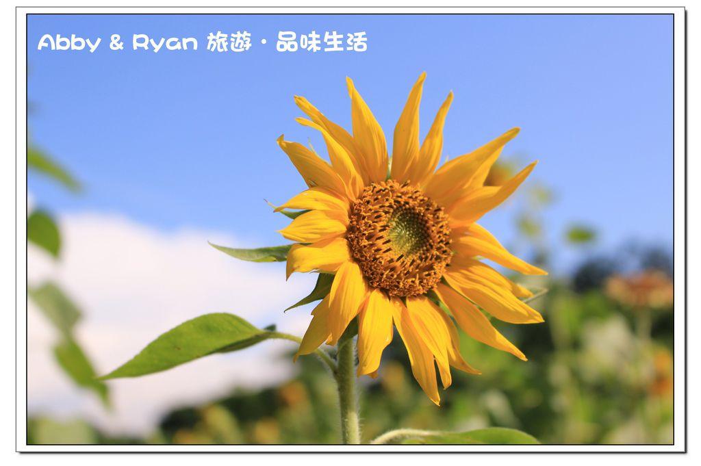 newIMG_6871.jpg