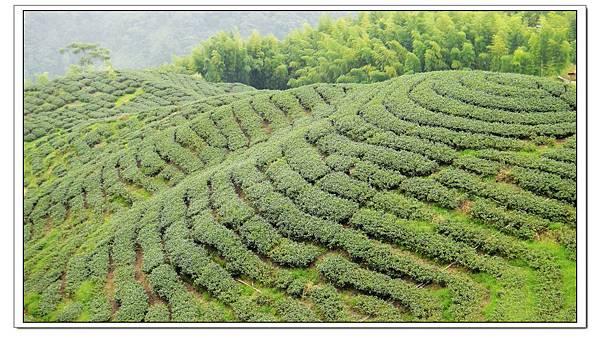 茶1.jpg