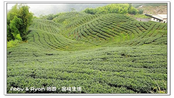 茶2.jpg