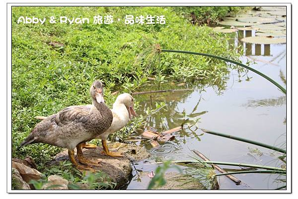 newimage388.jpg