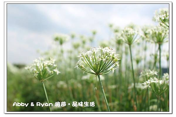 newIMG_4499.jpg