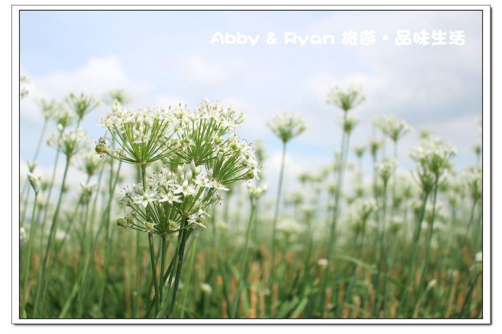 newIMG_4504.jpg