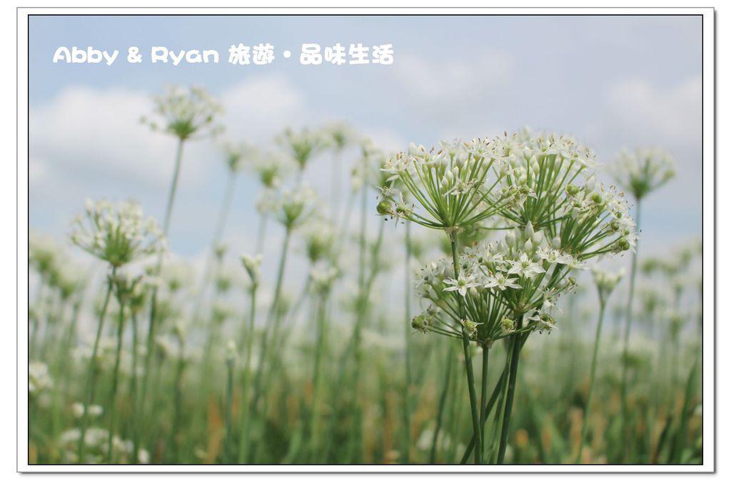 newIMG_4508.jpg
