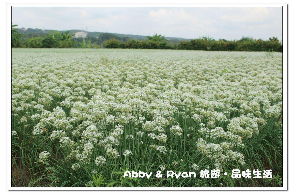 newIMG_4520.jpg