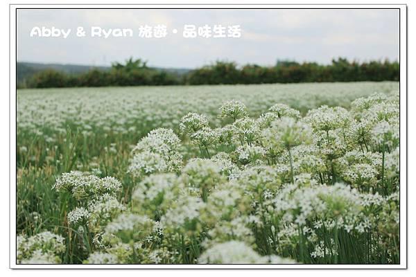 newIMG_4529.jpg