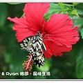 newIMG_6345.jpg