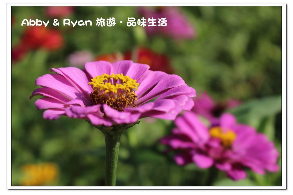 newIMG_6161.jpg