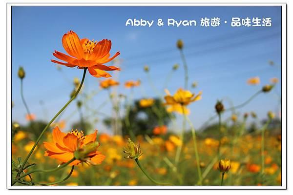 newIMG_6232.jpg