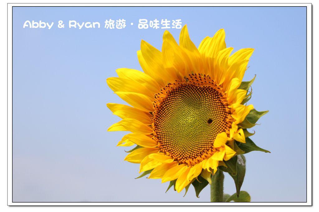 newIMG_9116.jpg