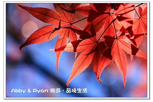 newIMG_1259.jpg