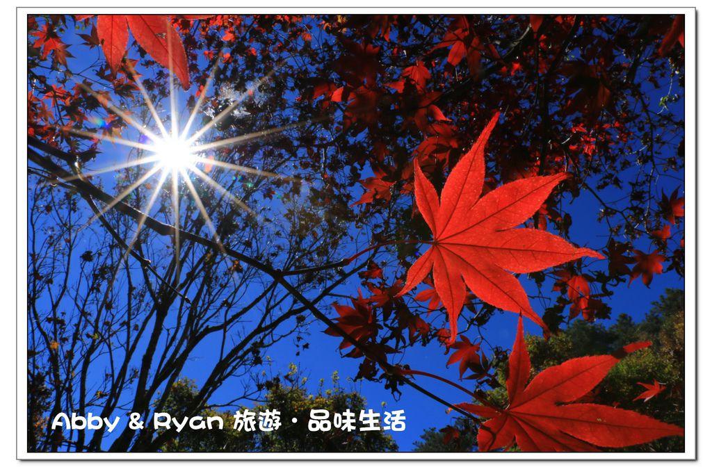 newIMG_1267.jpg