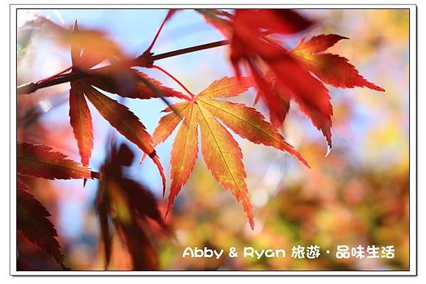 newIMG_9274.jpg